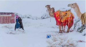 """""""ซาอุดิอาระเบีย-แอลจีเรีย"""" หิมะตกในทะเลทราย"""